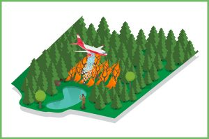 Forestry Protection