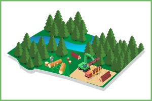 Forestry Sylviculture